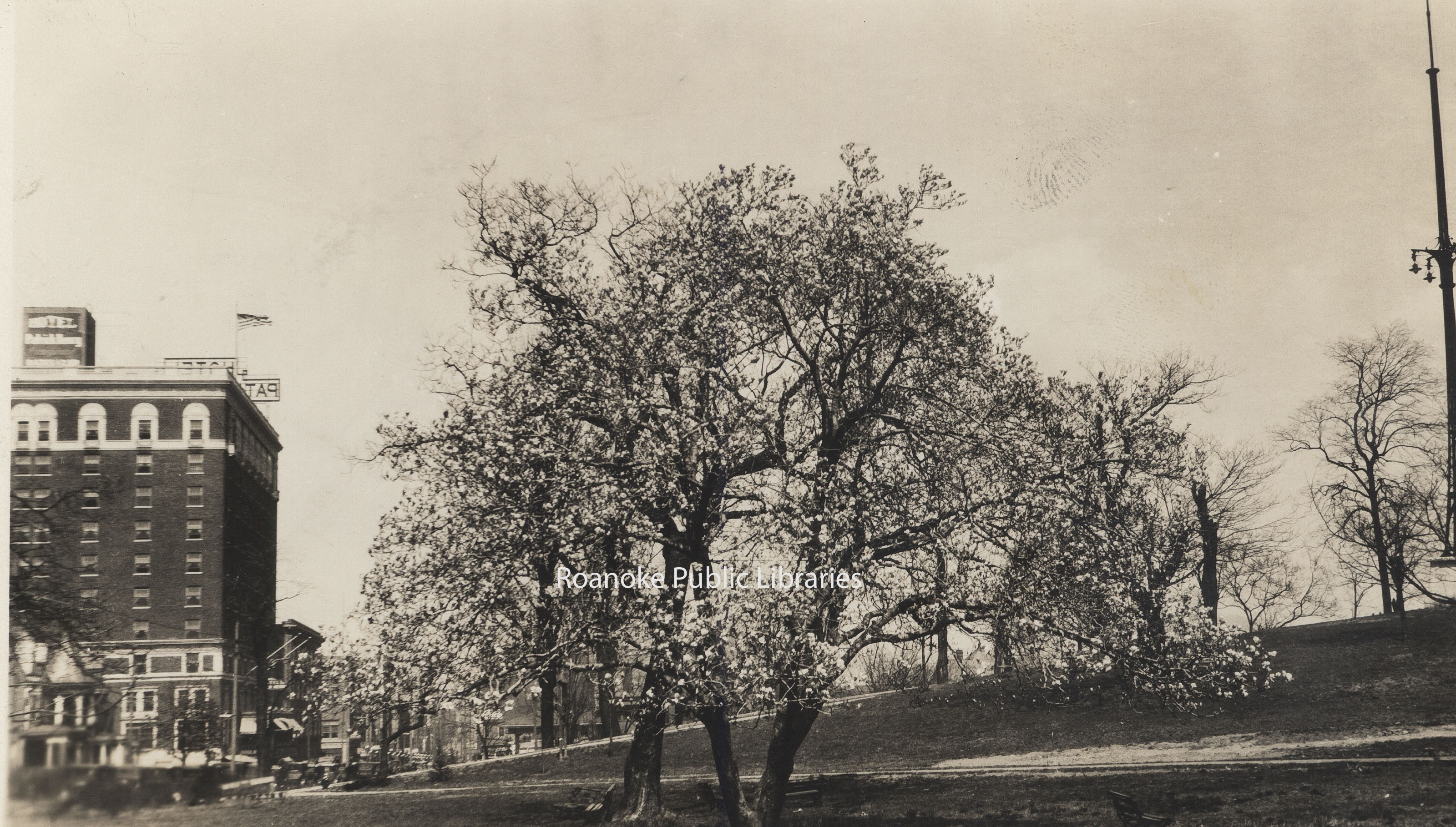 CPC 52 Japanese Magnolia.jpg