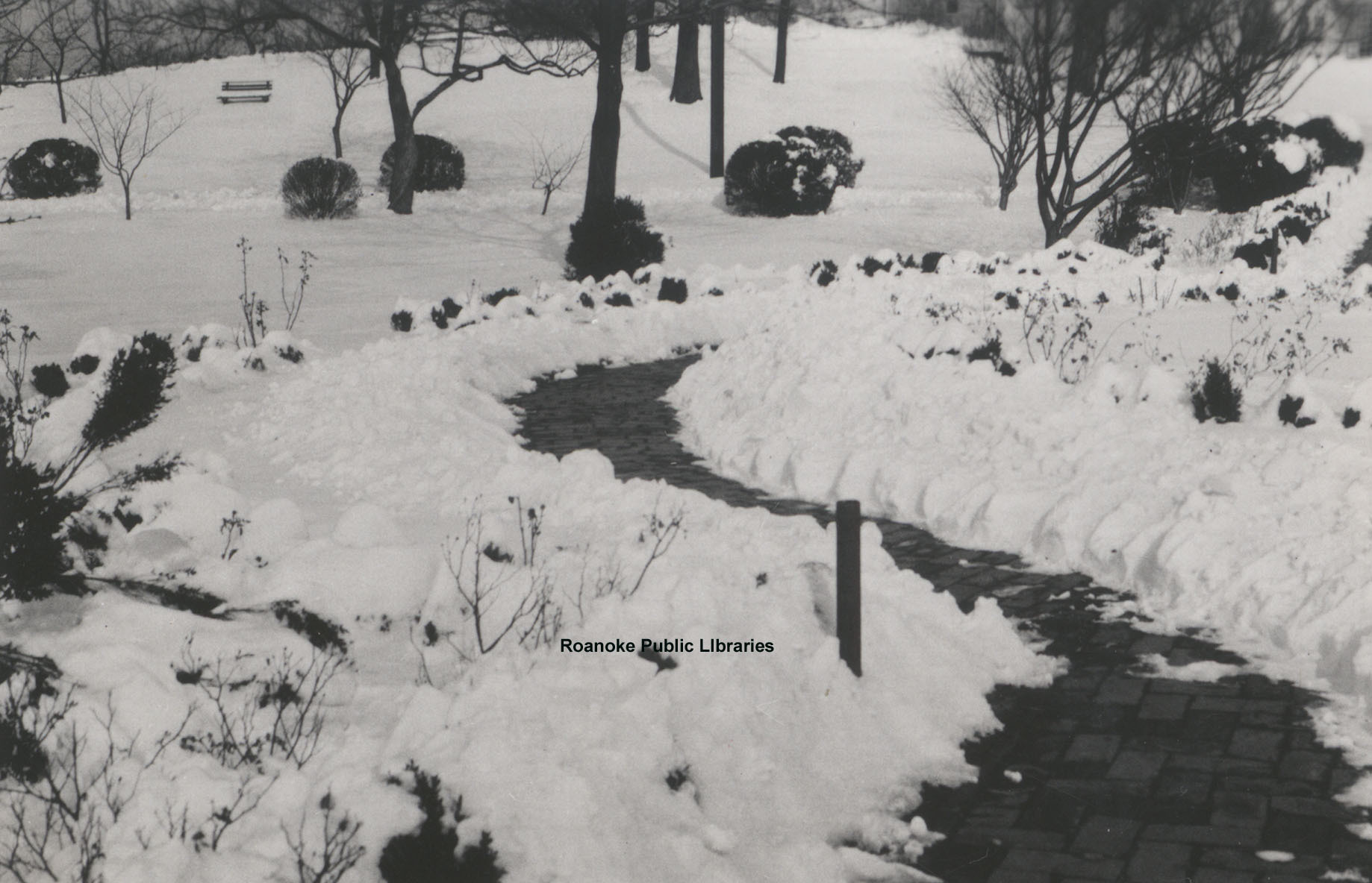 Davis 1.96 Snow in Elmwood.jpg