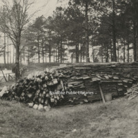 Davis2 91.1g Woodpile at Pine Gardens