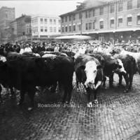 Davis2 3.15 Cows on Market
